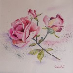 Rose ceuillie   40x40