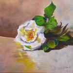 rose de B.odin